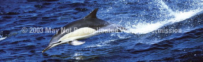 ClearVue Graphics Window Graphic - 16x54 Dolphin WLD-024-16-54