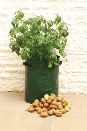 Haxnicks K705 Bosmere Potato Deck-Patio Grow Bag Planter