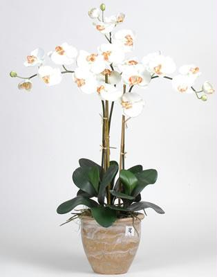 Triple Stem Phalaenopsis Silk Orchid Arrangement ZX9NN1017-CR