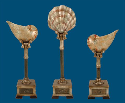 SI 91-4423 Set of 3 Cultured Seashells
