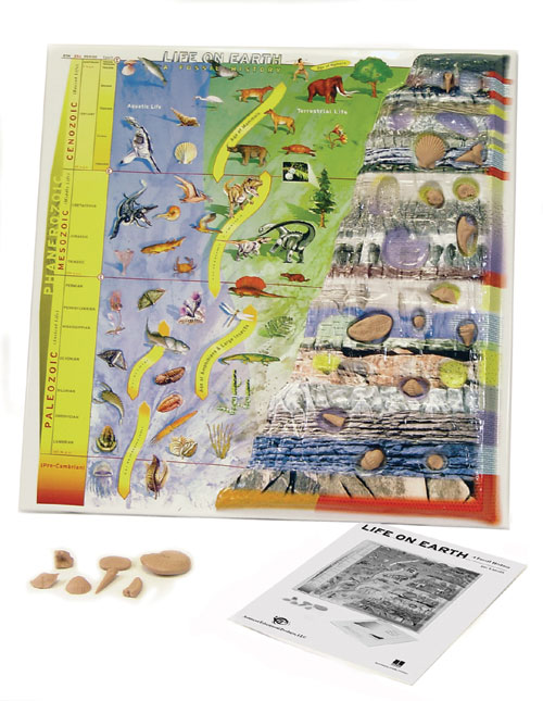 Hubbard Scientific 567 Life on Earth A Fossil History Model
