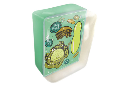 Hubbard Scientific 2058 InflaTablePlant Cell Model