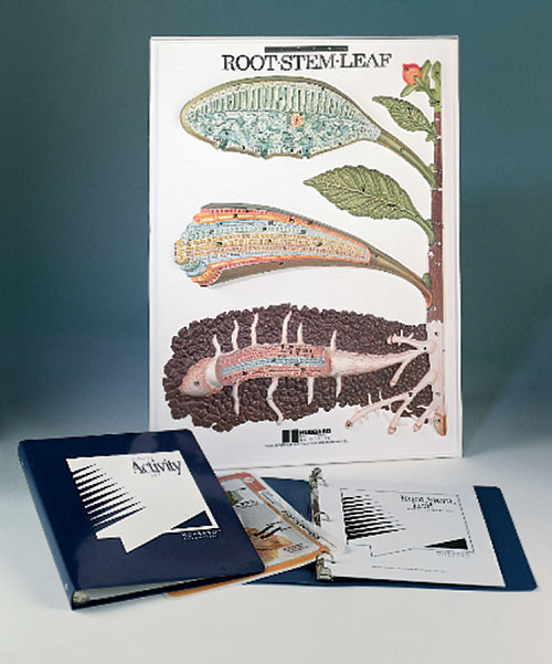 Hubbard Scientific 2840 Root Stem and Leaf Model Activity Set