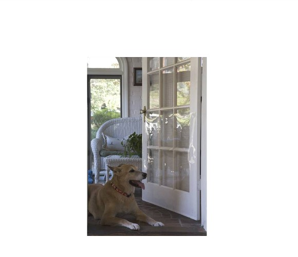 Cardinal Gates DRS Door Sheild for Pets Safety Gate - Clear