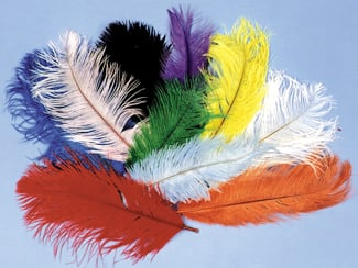 Cheap Costumes - Costumes For All Occasions BB05PK Ostrich Plumes 12 To 16In Pink
