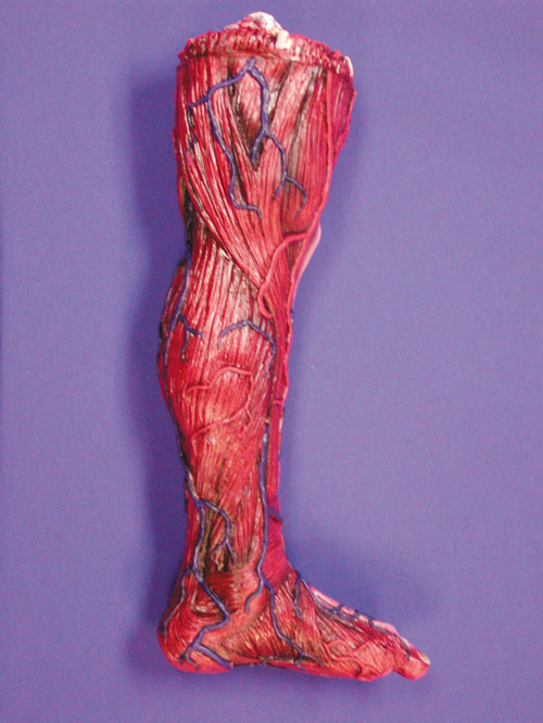 Costumes For All Occasions 85052 Skinned Left Leg