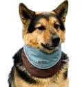 Cool Bandanas - Kyjen Company Bandana Cool It Asst Assorted Large - OH00947