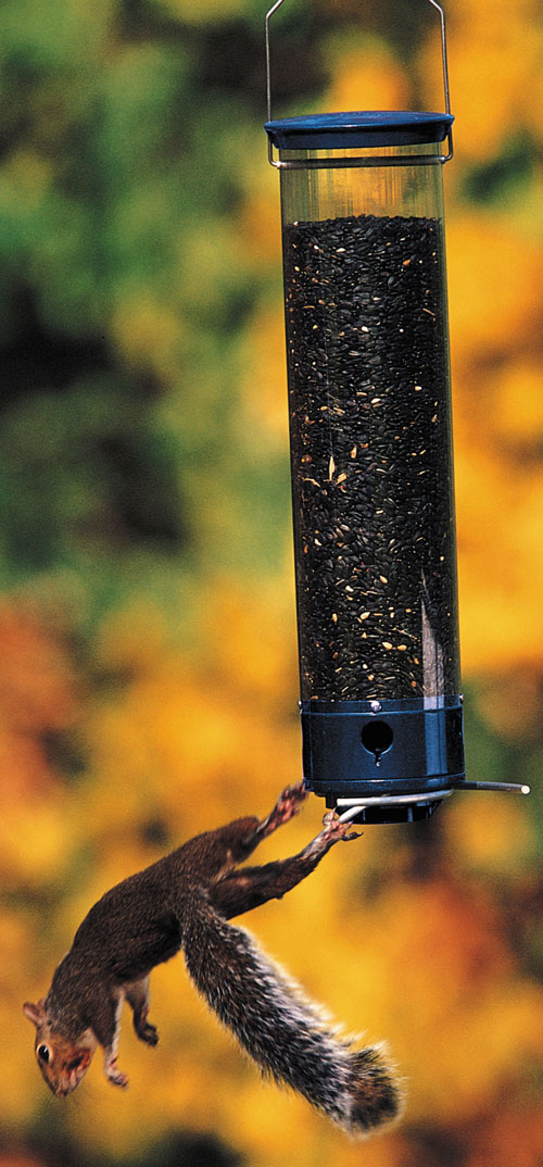 Droll Yankees  Inc Yankee Whipper 180 Degree Bird Feeder (GC1269 DYYCPW) photo