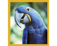 Magnetic Bookmark Macaw Hyacinth Blue Bookmark GC2853