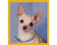 Magnetic Bookmark Chihuahua Peppita Bookmark