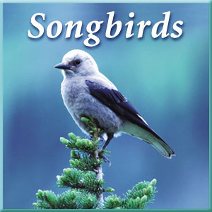 Naturescapes Music NS022 Songbirds Audio CD