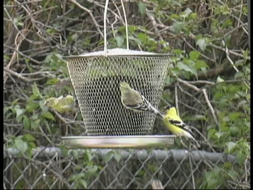 Tray Mesh Bird Feeder (ZX9GC3305 PA895717 PamperedPets) photo