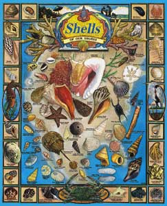 White Mountain Puzzles Shells of Our Shores Puzzle