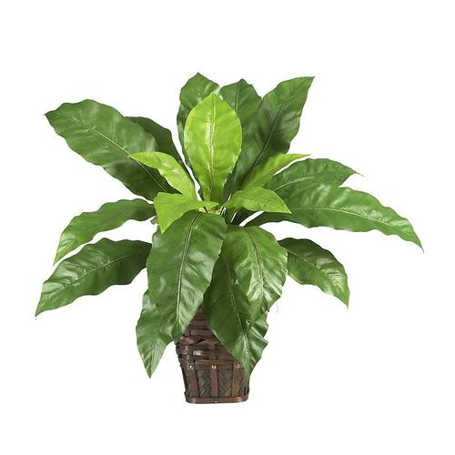 Nearly Natural 6530 Birdsnest Fern with Wicker Basket