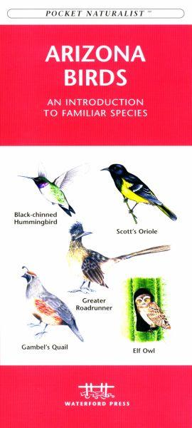Waterford Press WFP1583551073 Arizona Birds Book: An Introduction to Familiar Species (State Nature Guides)