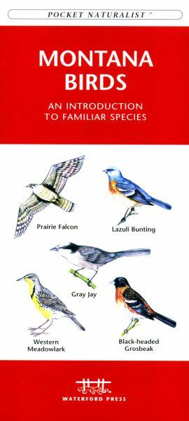 Waterford Press WFP1583551110 Montana Birds Book: An Introduction to Familiar Species (State Nature Guides)