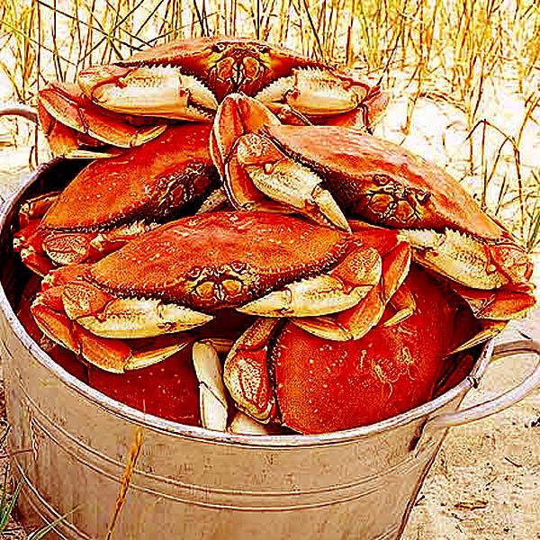 Lobster Gram DC5 FIVE 1.52 LB DUNGENESS CRABS