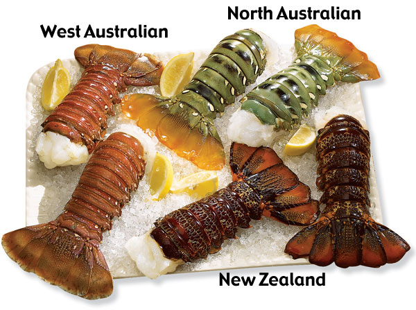 Lobster Gram DUTS4 DOWN UNDER TAIL SAMPLER WITH 12 LOBSTER TAILS