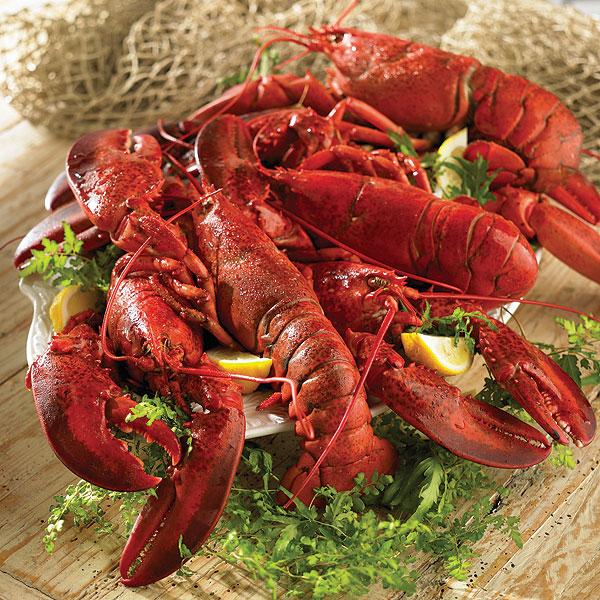 Lobster Gram JTL6C LIVE LOBSTER SIX PACK WITH 1 LB LOBSTERS