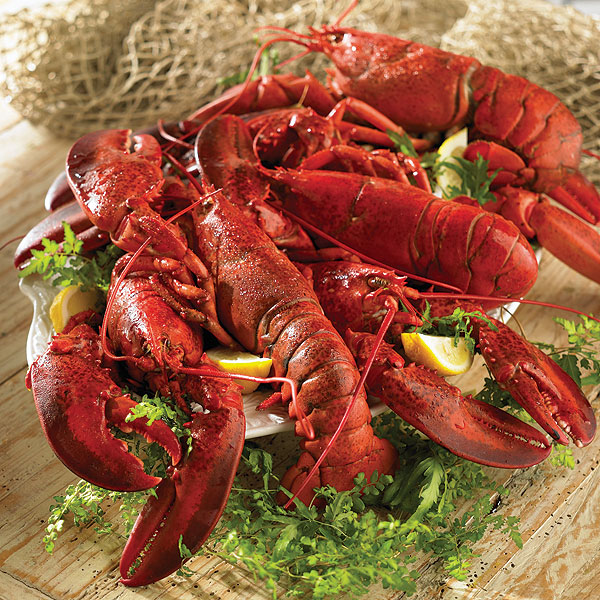 Lobster Gram JTL6Q LIVE LOBSTER SIX PACK WITH 1.25 LB LOBSTERS