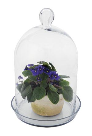 Achla BJT-02 Bell Jar Terrarium II - Glass