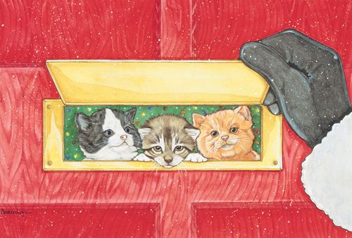 Pipsqueak Productions C898 Mix Dog With Cat Holiday Boxed Cards