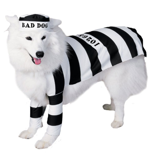 Rubies Costume Co 6897 Prisoner Dog Pet Costume Size Medium BUYS10396