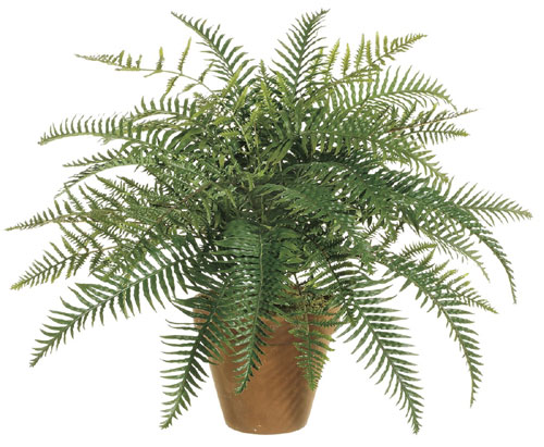 Image of 24 Inch River Fern Bush X35 - Qty of 6