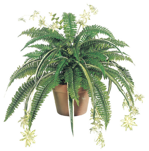 32 Inch Silk Mixed Boston Fern-Spider plant x48 - Green - Qty of 6