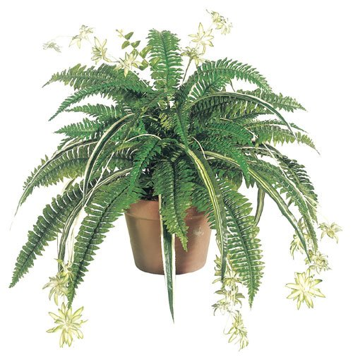 Image of 32 Inch Silk Mixed Boston Fern-Spider plant x48 - Green - Qty of 6