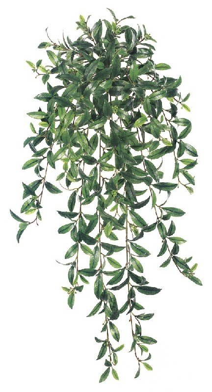 36 Inchs Large Ruscus Bush - Two Tone Green - Qty of 6