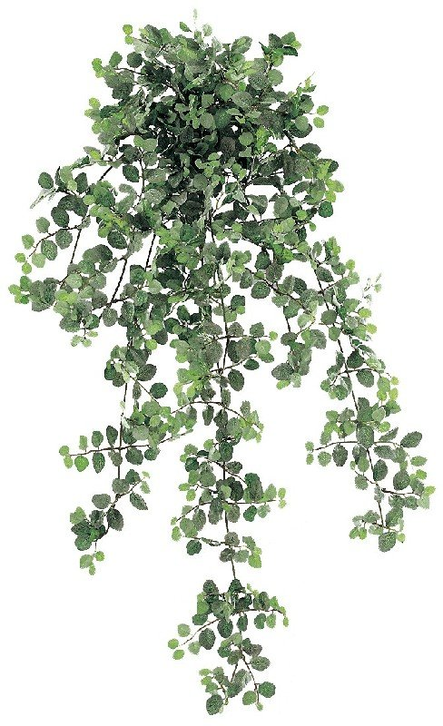 34 Inch Peperomia Hanging Bush with 1264 Leaves - Frosted Green - Qty of 6