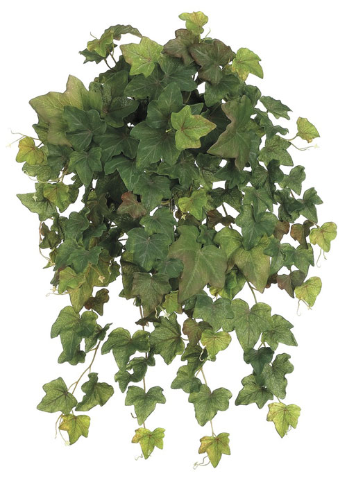 Image of 23 Inch Rounded English Ivy Hanging Bush x19 - Green Brown - Qty of 6