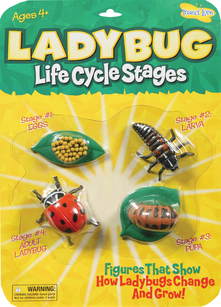 Insect Lore Ilp6090 Ladybug Life Cycle Stages