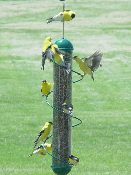 17 Inch Green Spiral Finch Tube Feeder