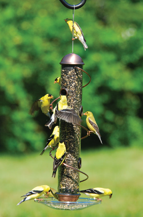 Songbird Essentials Bird Feeders