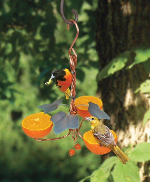 Songbird Essentials SEHHORTF Copper Oriole Triple Fruit Feeder with Ivy GC15800
