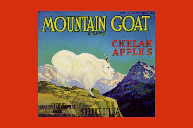 Mountain Goat Chelan Apples 28x42 Giclee On Canvas
