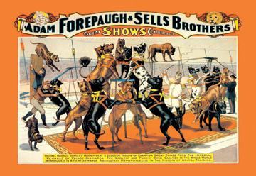 A Troupe of Champion Great Danes: Adam Forepaugh and Sells Brothers Great Shows Consolidated 12x18 Giclee on c