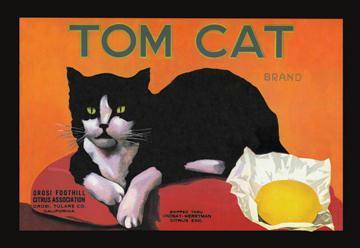 Tom Cat Brand 12x18 Giclee On Canvas