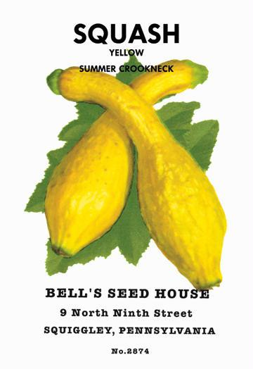 Squash: Yellow Summer Crookneck 12x18 Giclee On Canvas Summer Squash Seeds, Summer Squash Seed, Squash Seeds, Summer Squash, Garden Seeds, Vegetable Seeds
