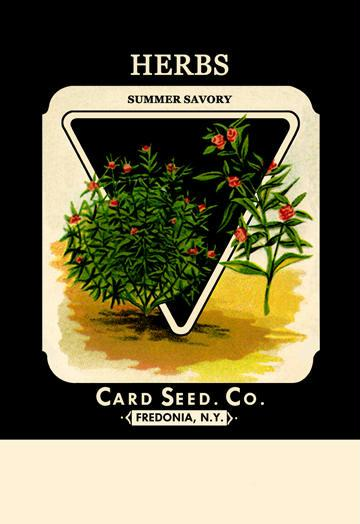 Herbs: Summer Savory 12x18 Giclee On Canvas Herbs, Herb Seeds, Herb Seed, Herb Plants, Herb Garden, Garden Seeds, Vegetable Garden, Seeds