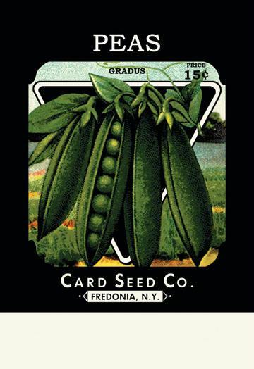 Buyenlarge 02588-3CG12 Peas: Gradus 12 x 18 Giclee on Canvas Pea Seeds, Peas Seed, Pea Seeds, Peas, Garden Peas, Garden Seeds, Vegetable Seeds, Garden Supplies