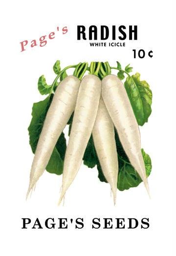 Page's Radish: White Icicle 12x18 Giclee On Canvas Radish, Radish Seeds, Seeds, Vegetable Seeds, Garden Seeds, Vegetable, Garden