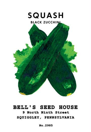 Squash: Black Zucchini 12x18 Giclee On Canvas Zucchini Seeds, Zucchini Seed, Summer Squash, Squash, Zucchini Squash, Garden Seeds, Vegetable Seeds