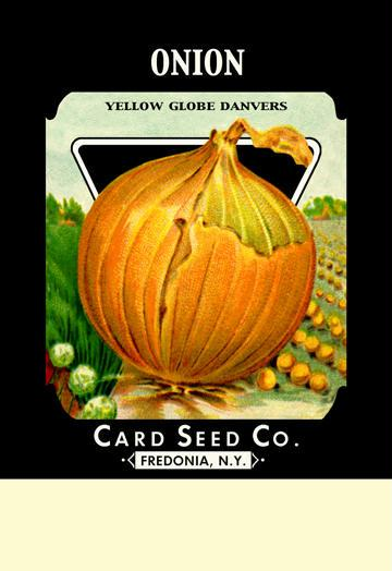 Onion - Yellow Globe Danvers 12x18 Giclee On Canvas Onion Seeds, Onion Sets, Onion Plants, Scallion Seeds, Bunching Onions, Green Onions, Garden Seeds