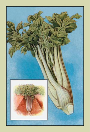 Buyenlarge 'Celery' 12 x 18 Giclee Print On Canvas Celery Seeds, Celeriac Seeds, Herb Seeds, Garden Seeds, Vegetable Seeds, Celery, Celeriac