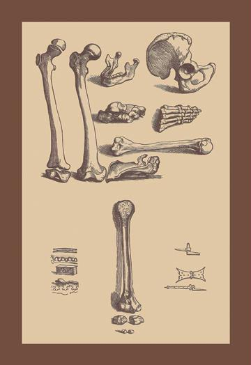 Bones with Tools 12x18 Giclee On Canvas