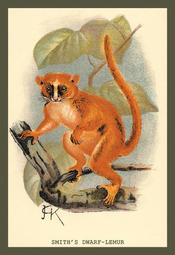 Smith's Dwarf-Lemur 12x18 Giclee On Canvas