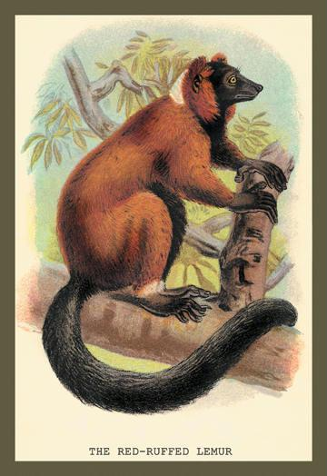 The Red-Ruffed Lemur 12x18 Giclee On Canvas